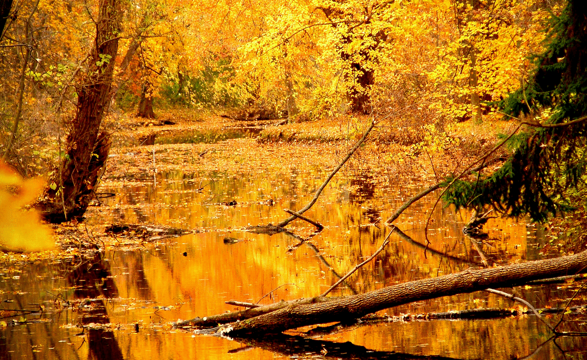 Осень Пушкина
